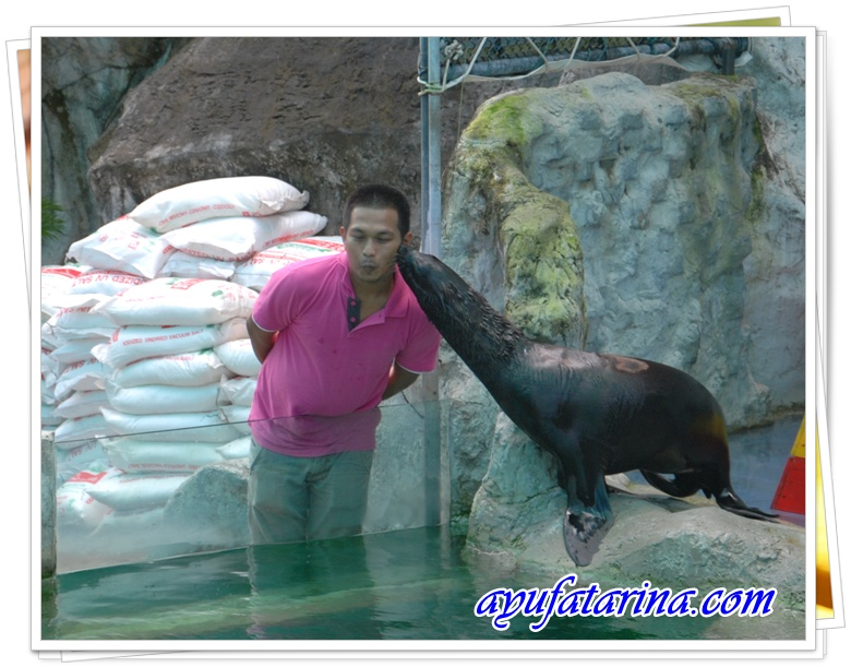 Seal Show Kissing Show - Songkhla Zoo 9