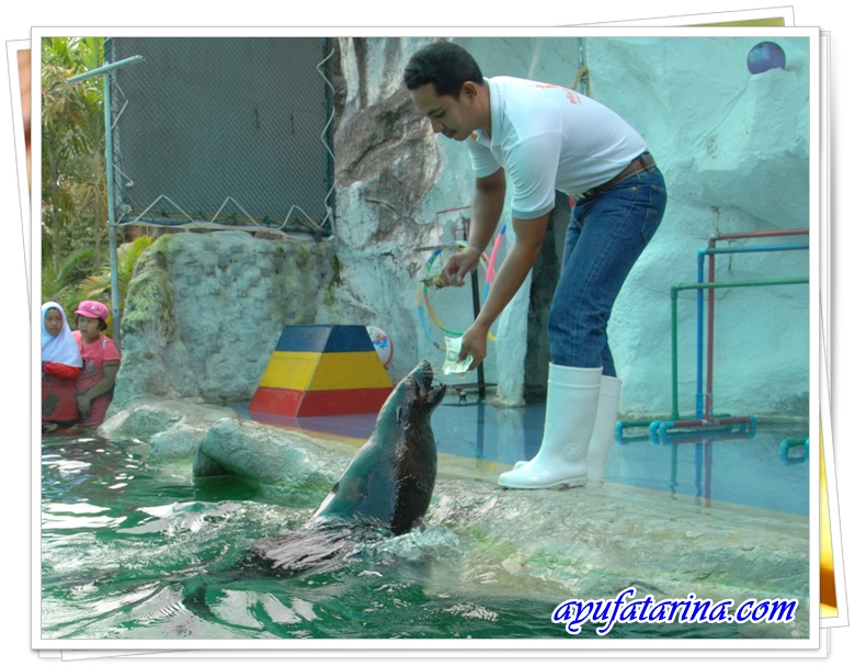 Seal Show- Songkhla Zoo 10