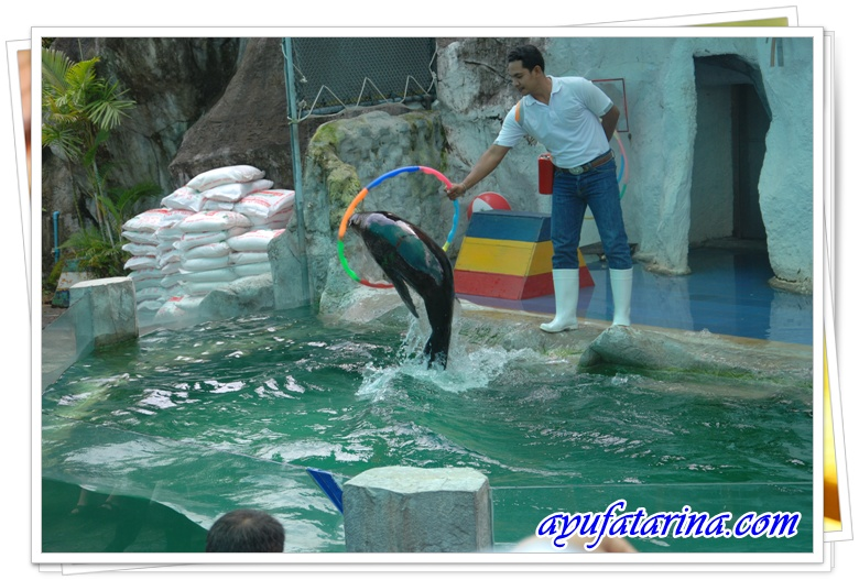 Seal Show= Songkhla Zoo 2