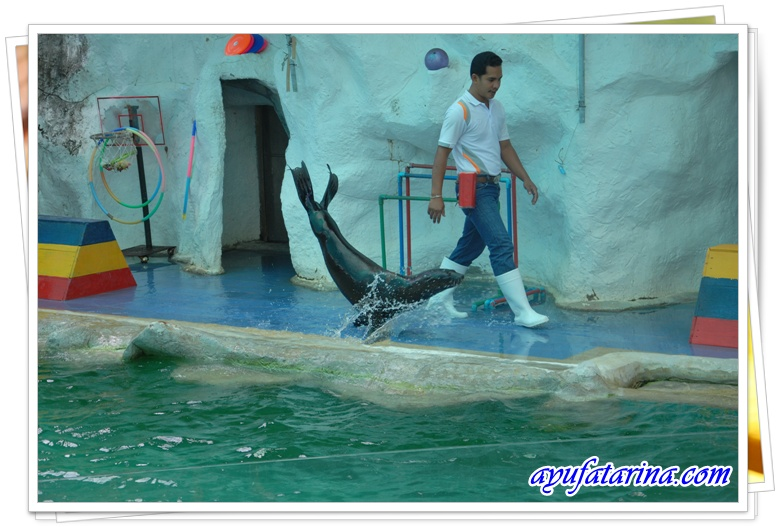 Seal Show = Songkhla Zoo 3