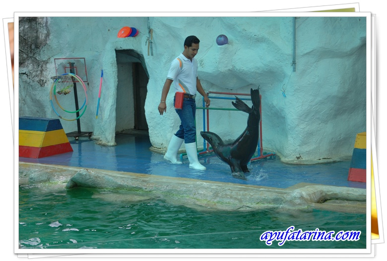 Seal Show = Songkhla Zoo 4