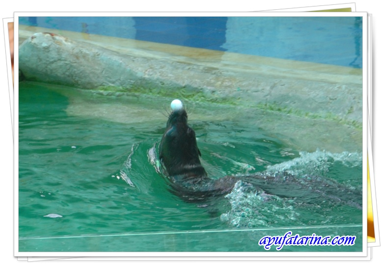 Seal Show = Songkhla Zoo 5