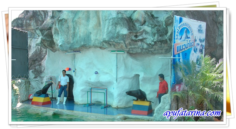 Seal Show - Songkhla Zoo 6