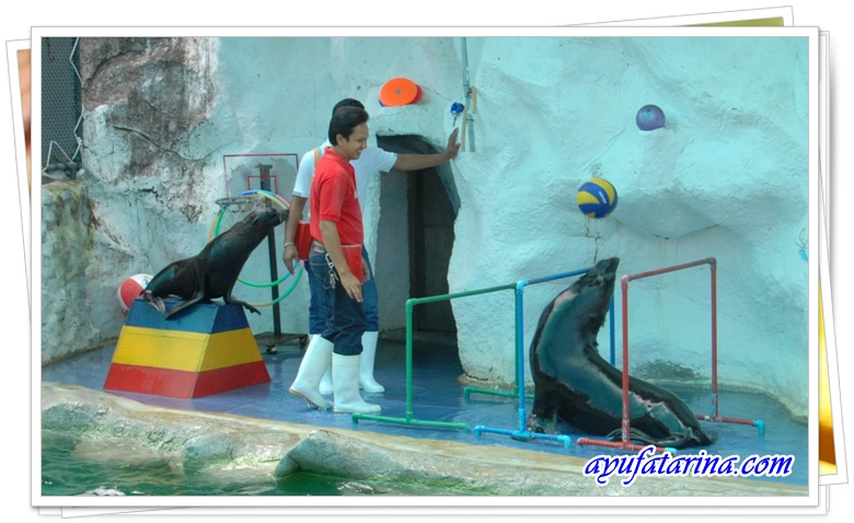 Seal Show - Songkhla Zoo 8