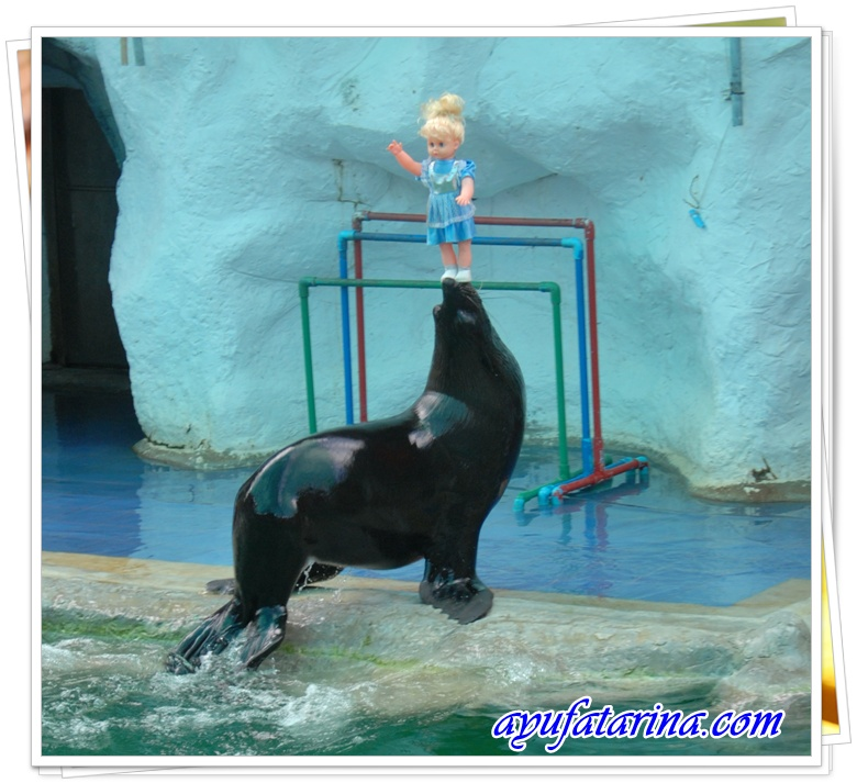 Seal Show - Songkhla Zoo 9