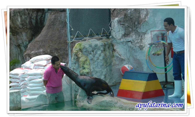 Seal ShowKissing Show - Songkhla Zoo 8