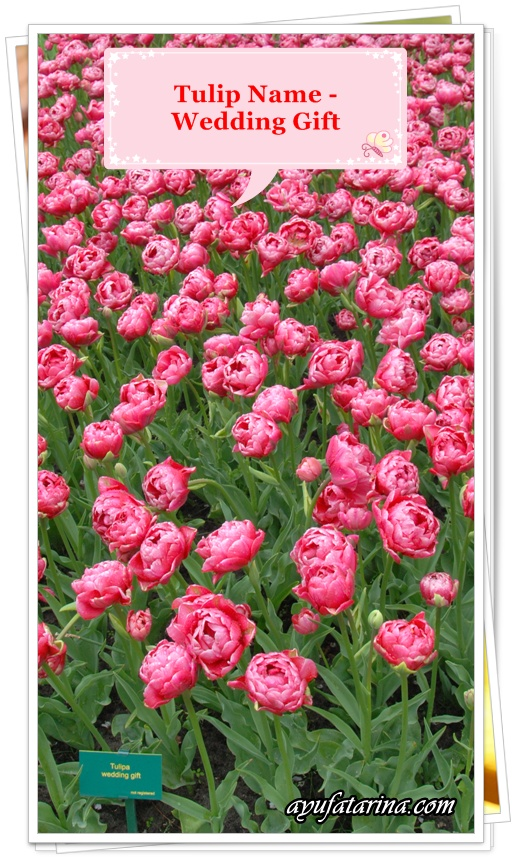Keukenhoff Tulip Name Wedding Gift