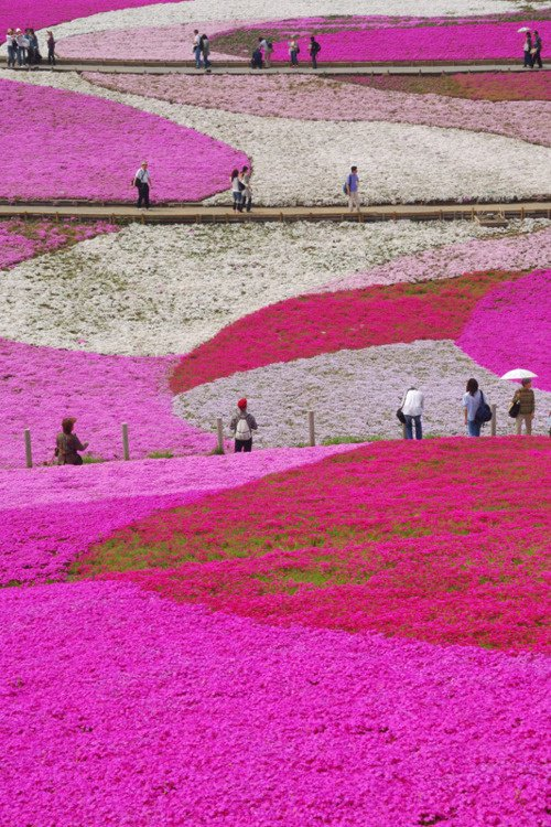 Hitachi Seaside Park, Ibaraki, Japan