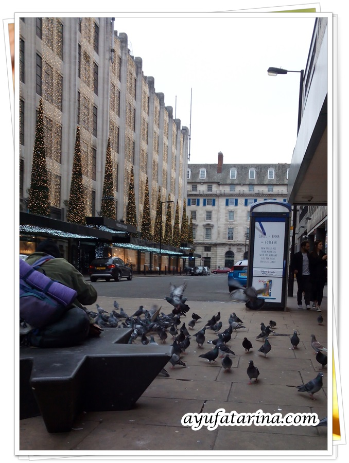 House of Frasers Pigeons