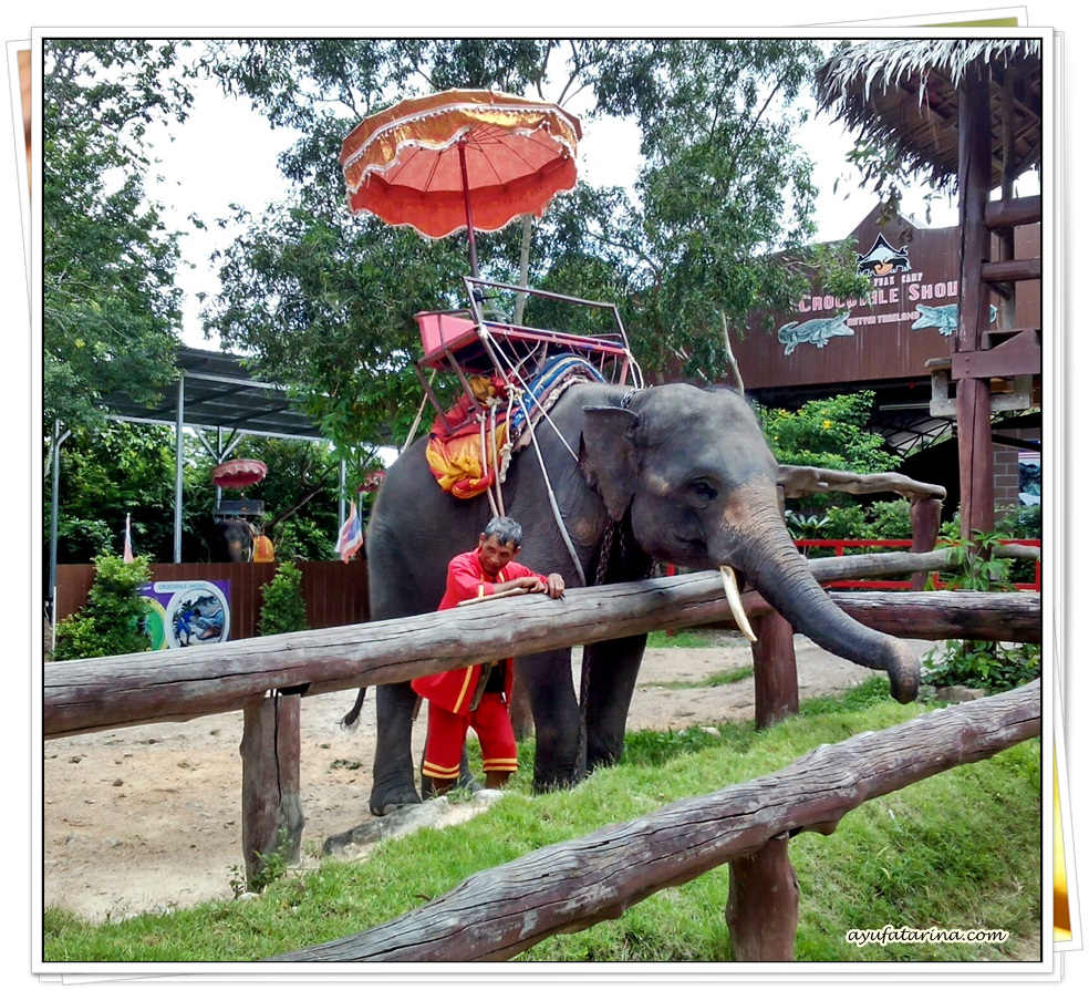Chang Puak Camp Hatyai Elephant Ride